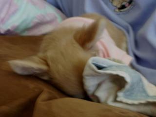 Mocha_hiding_her_face_sleeping_1262