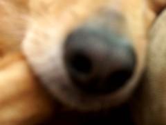 Redone_shroomie_and_pal_42006_006